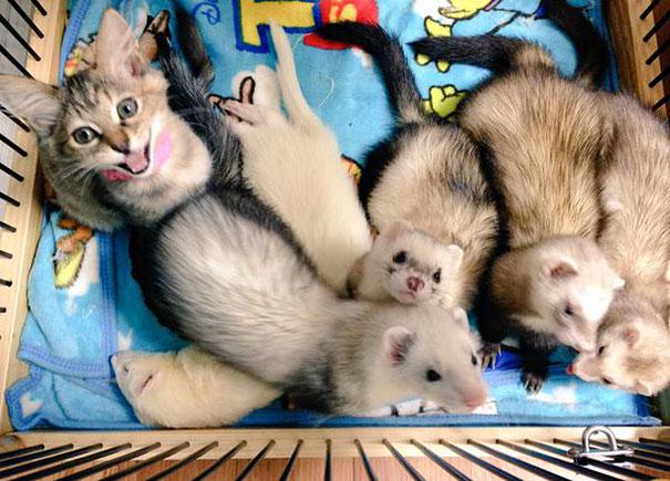 gatito-rescatado2