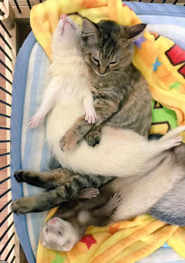 gatito-rescatado3