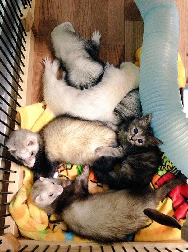 gatito-rescatado4