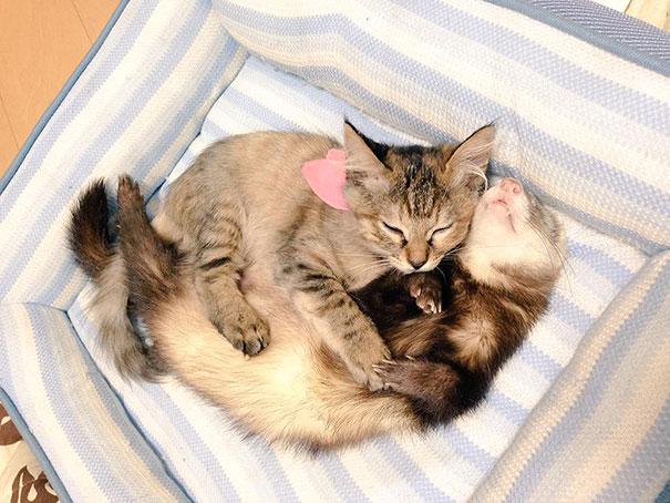 gatito-rescatado6