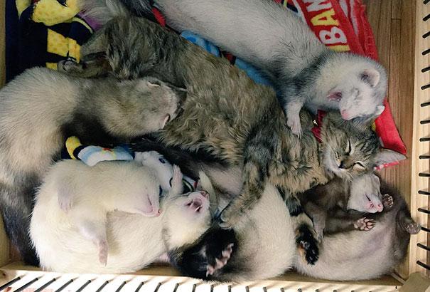 gatito-rescatado7