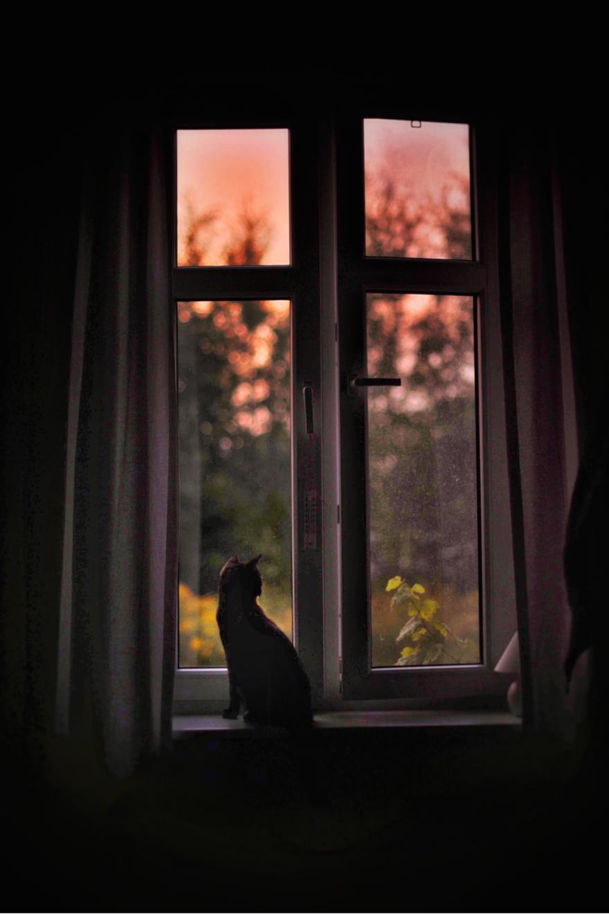 gato-verano22