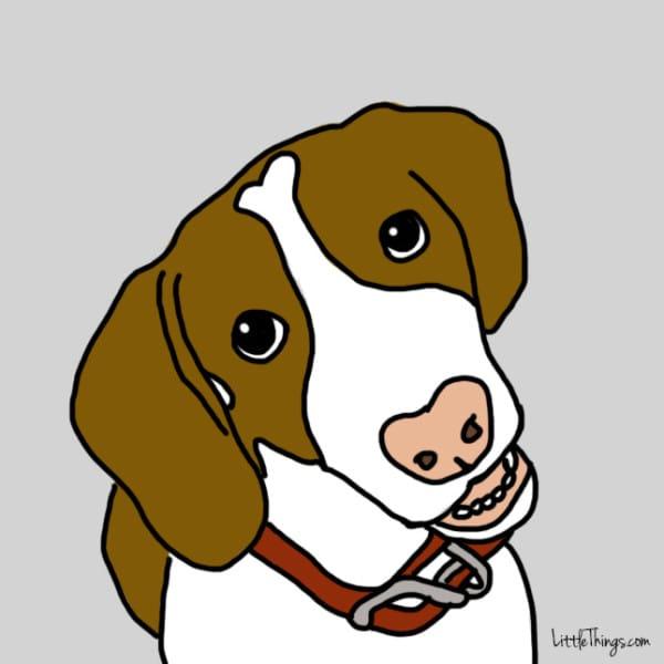 lenguaje-de-amor-perros1