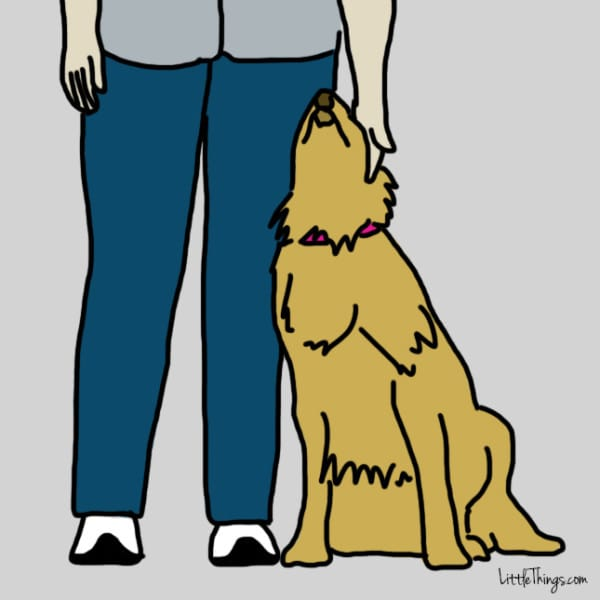 lenguaje-de-amor-perros3