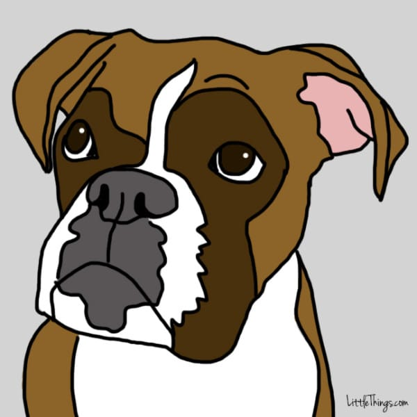 lenguaje-de-amor-perros5