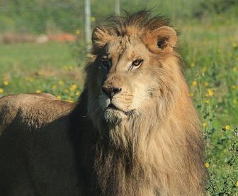 leon-circo10
