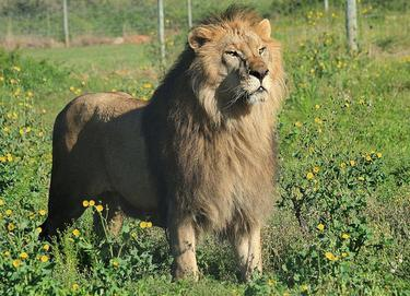 leon-circo11