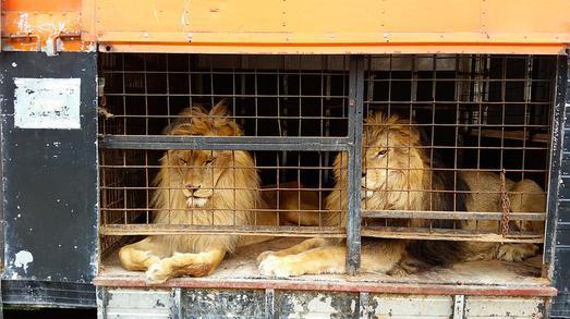leon-circo2