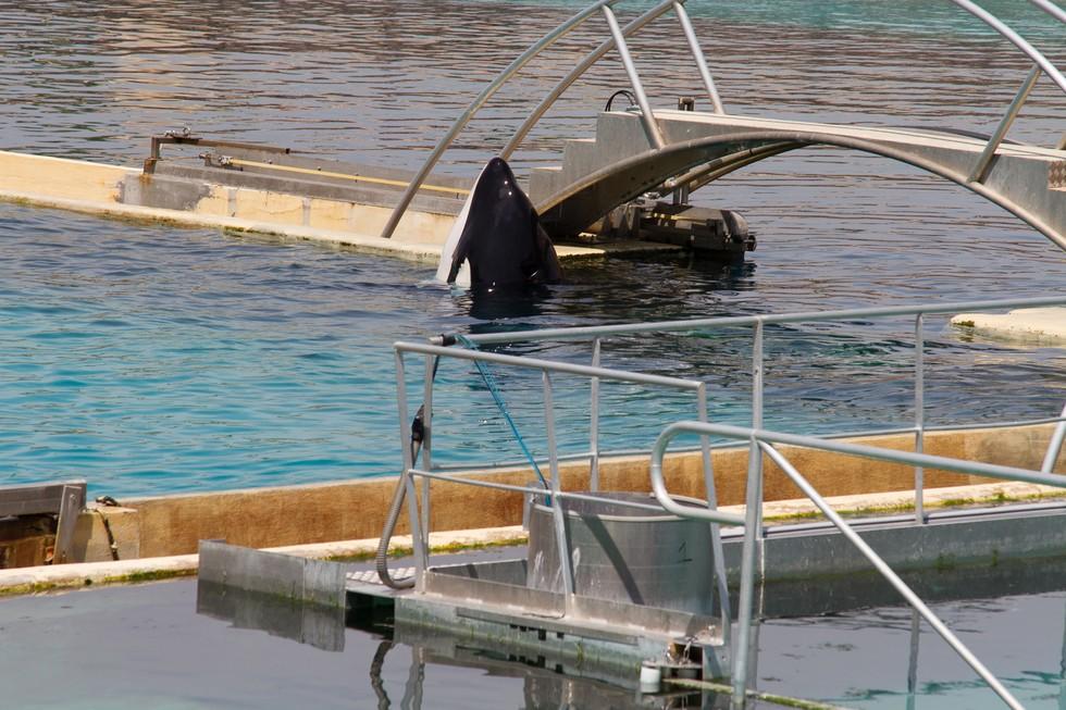 ejecutado en la orca: