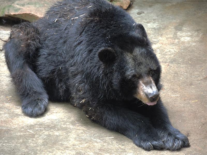 neglicencia-de-osos-en-pensilvania1