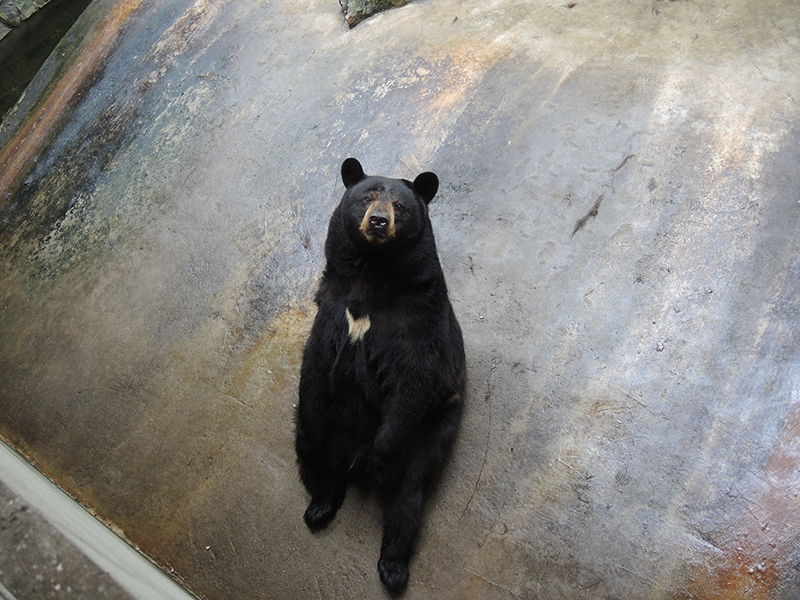 neglicencia-de-zoo-osos-en-pensilvania2