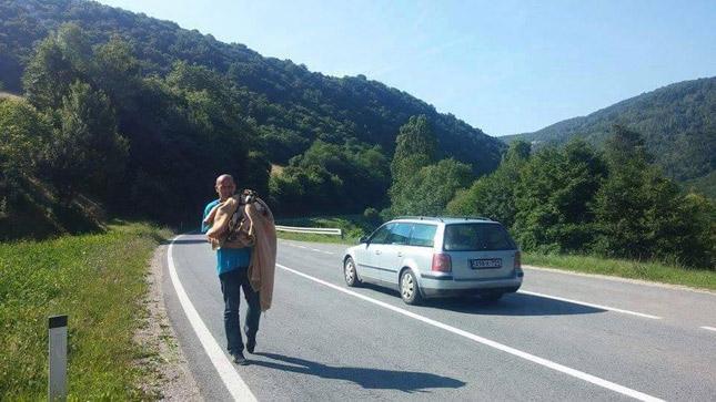 perrita-detiene-trafico-para-pedir-ayuda1