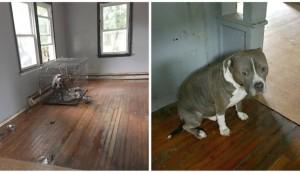 perro-abandonado-casa-vacia3 - copia