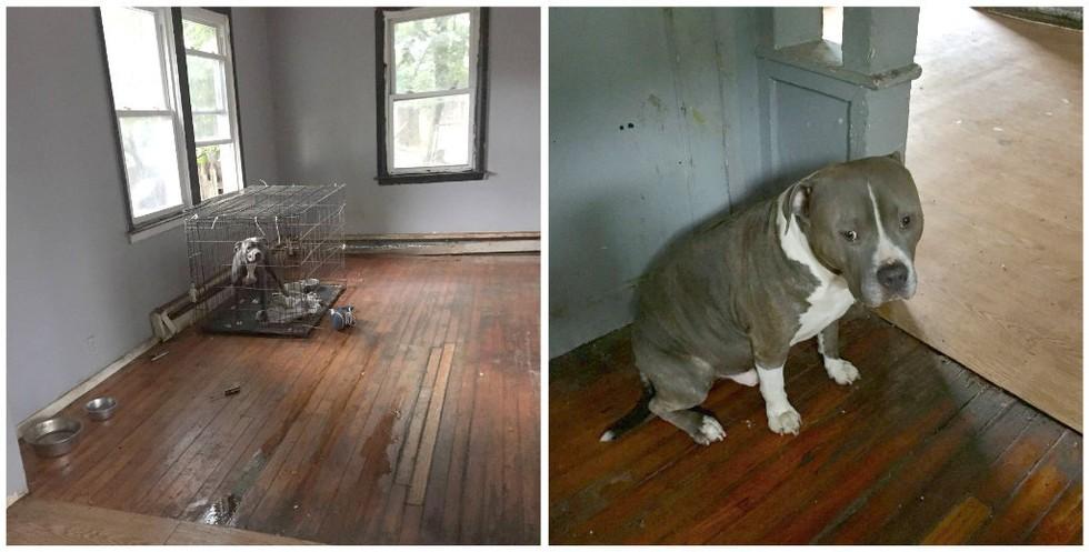 perro-abandonado-casa-vacia3
