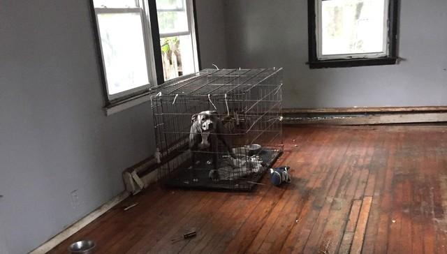 perro-abandonado-casa-vacia4