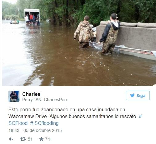 perro-agradecido-inundacion1