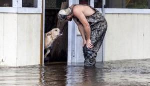 perro-agradecido-inundacion4 - copia