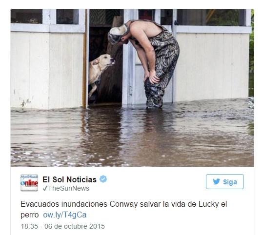 perro-agradecido-inundacion4