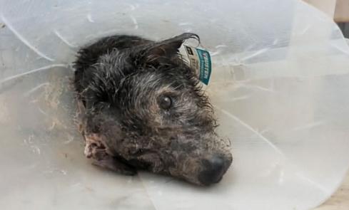perro-anciano-maltratado1