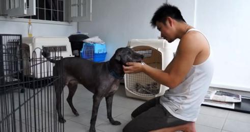 perro-anciano-maltratado2