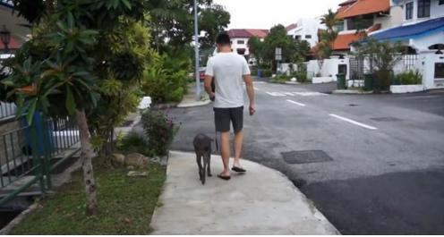 perro-anciano-maltratado3