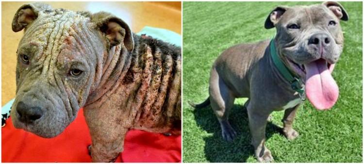 perro enfermo transformacion 9