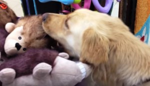 perro-escoge-juguete