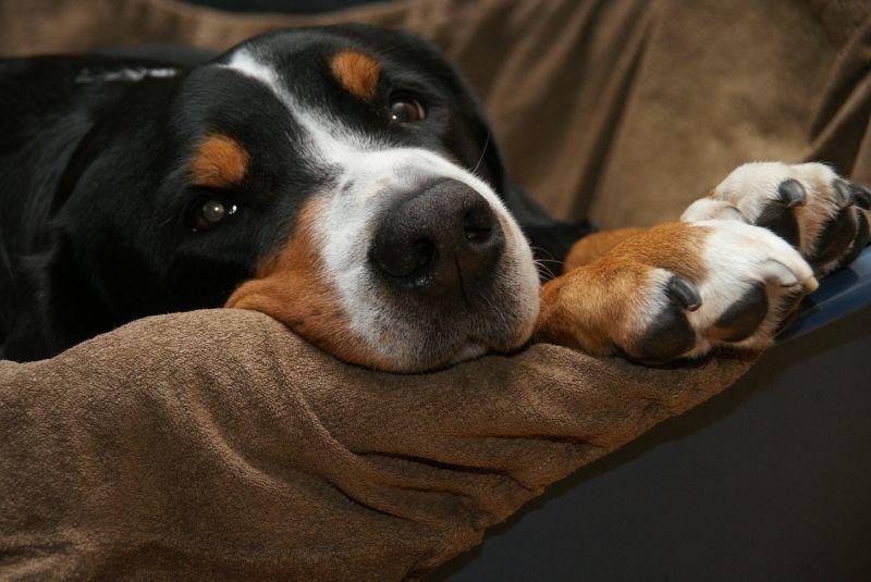perros-felices-cuando-llegamos-a-casa4