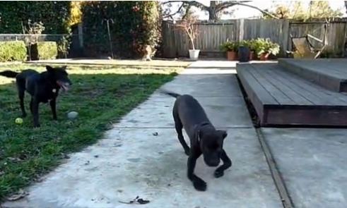 perros-patas-arqueadas-2
