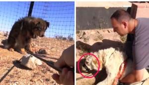perros-rescatados-desierto