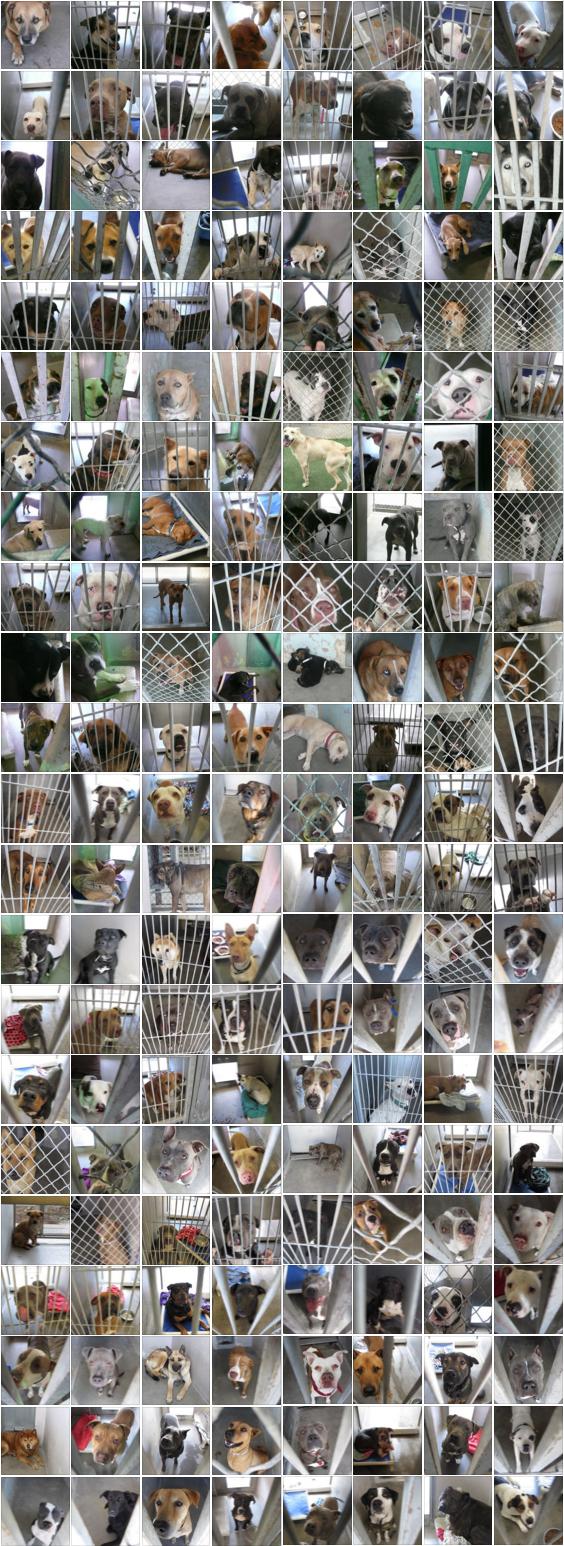 perros-sacrificados-refugio2