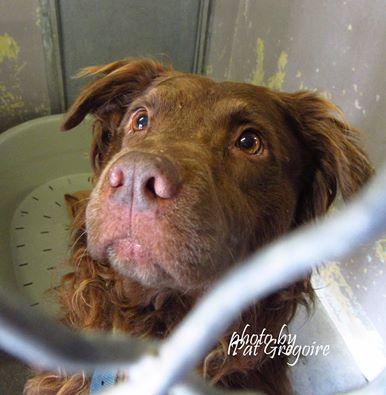 perros-sacrificados-refugio5