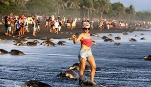 playas-costa--rica1
