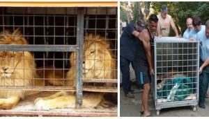 rescate-de-leones-hermanos