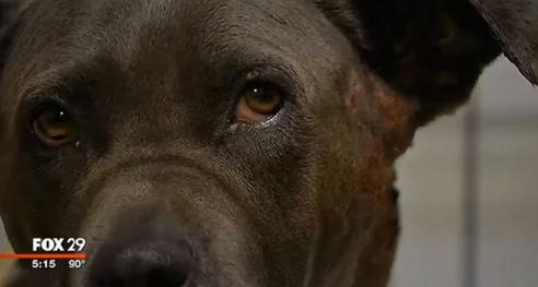 rescate-perro-bomberos3