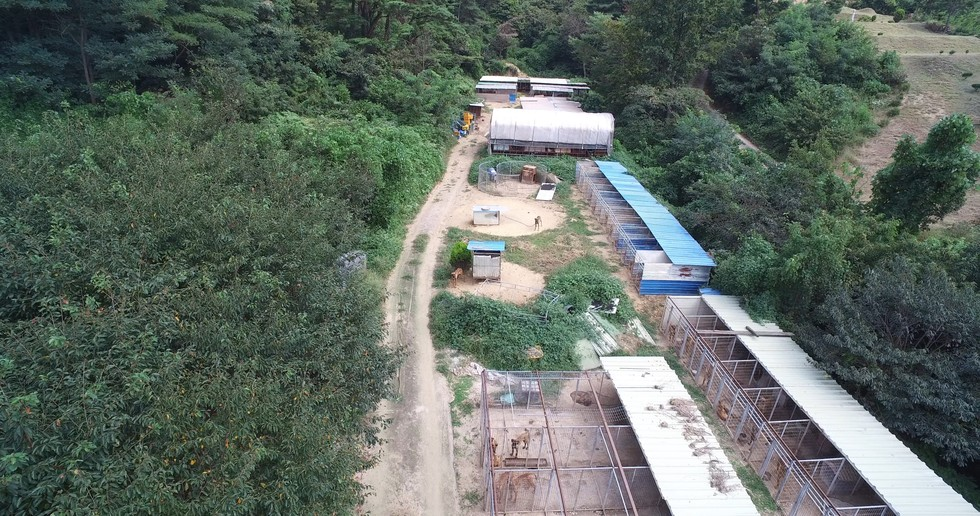 rescate-perro-granja-corea1