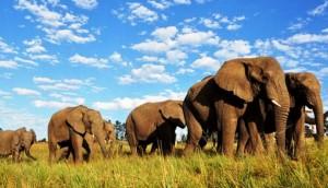 tembe-park-sudafrica - copia