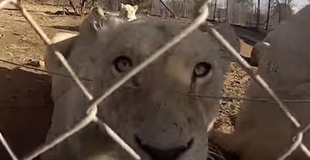 tigres-bebes-fusilados8