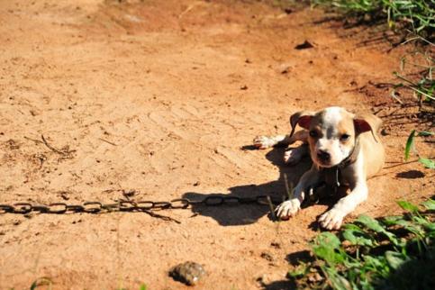 timi-rescate-pitbull3