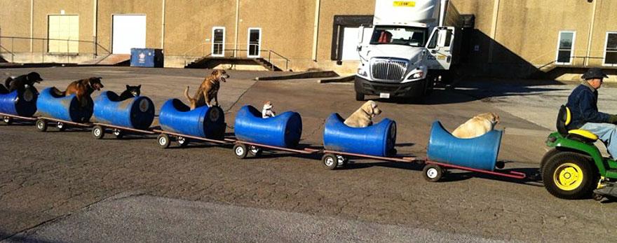 tren-perros2