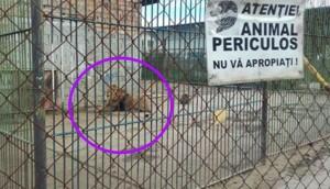 zoo deja leones 6