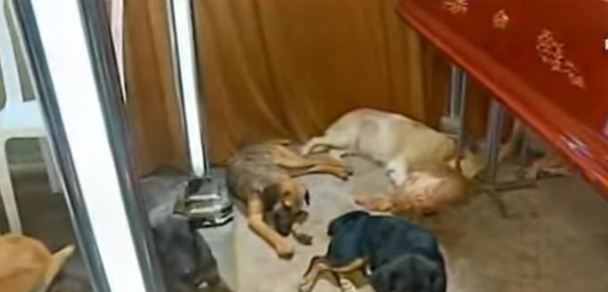 58-perros-asisten-a-funeral-de-quien-los-rescato2