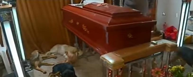 58-perros-asisten-a-funeral-de-quien-los-rescato3