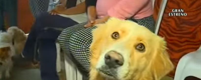 58-perros-asisten-a-funeral-de-quien-los-rescato4
