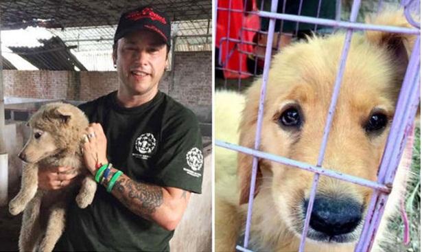 activistas rescatan perros yulin 1