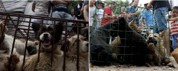 activistas rescatan perros yulin 2