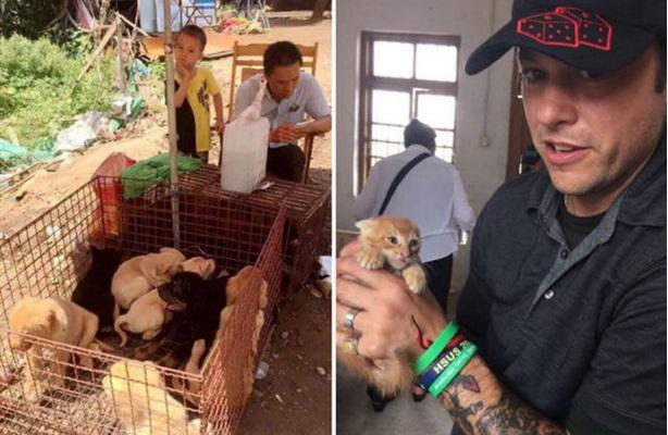 activistas rescatan perros yulin 5