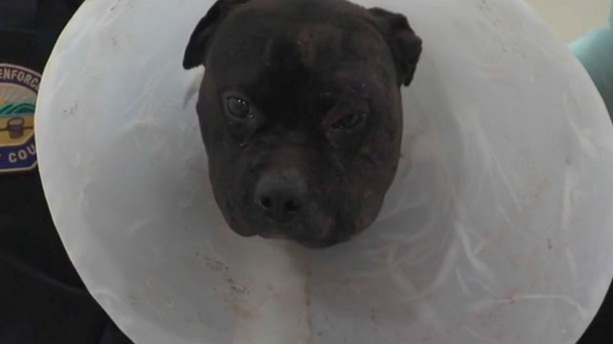 condenado por peleas de perros 3