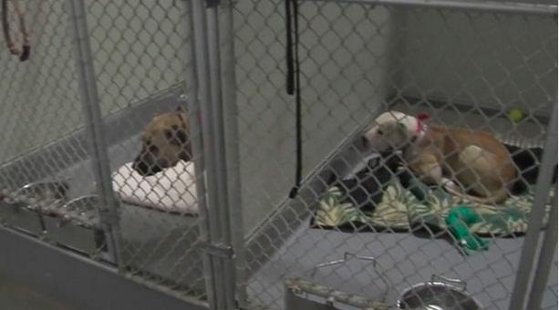 condenado por peleas de perros 5