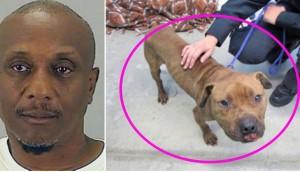 condenado por peleas de perros 7